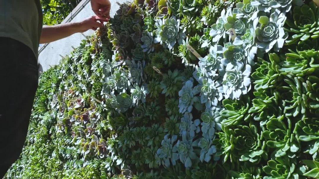 Orange County Plant Wall Experts - California Plant Walls